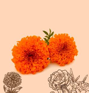 Scfe Co2 Extract Marigold Oleoresins