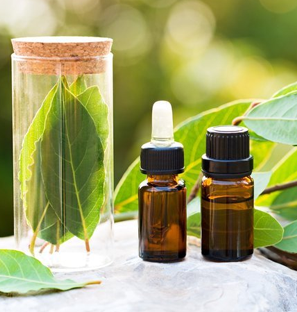 Bay Leaf Essential Oil Supplier from India