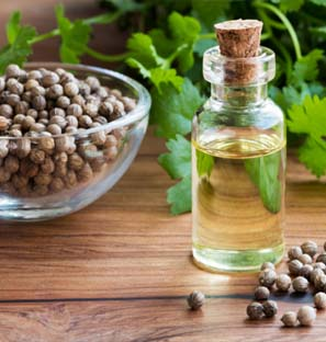 CO2 Extraction Coriander Oil Manufacturer