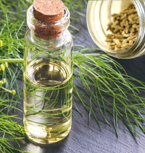 Supplier of Fennel Essential Oil from India