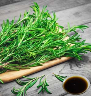 Rosemary Co2 Extract Oleoresin Supplier